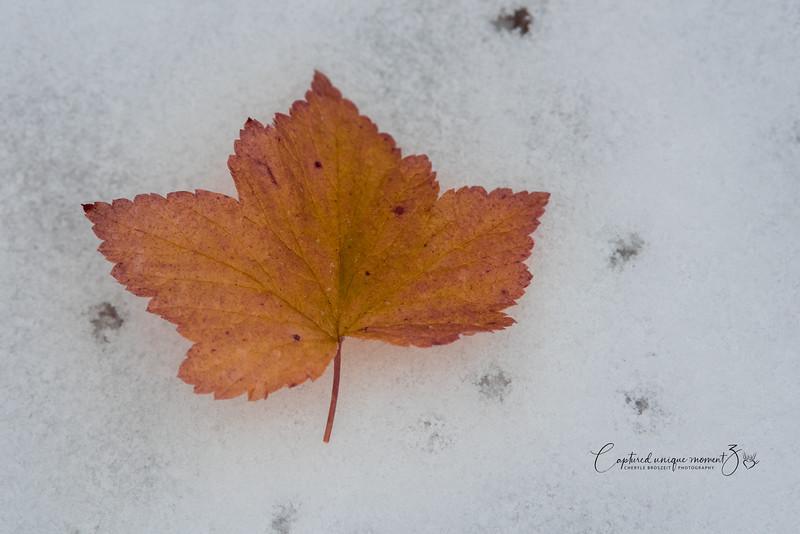 181006 Frozen in Time 0038.jpg