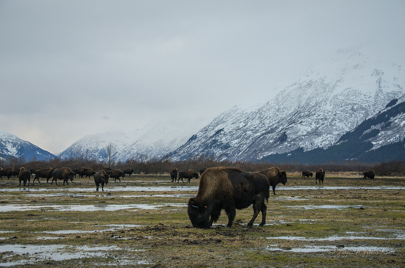 USA-Alaska-Alyeska-0369.jpg
