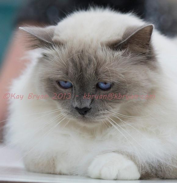 CatShow2014123.jpg