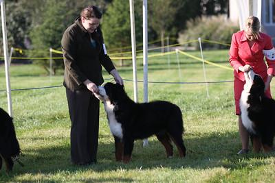 Sweeps 9-12mo Dogs