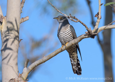 20190315-MMPI0053 - Anstead Bushland Reserve