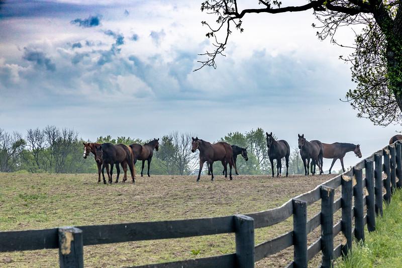 Manchester Horse Farm Lexington KY  April 25, 2019   028.jpg