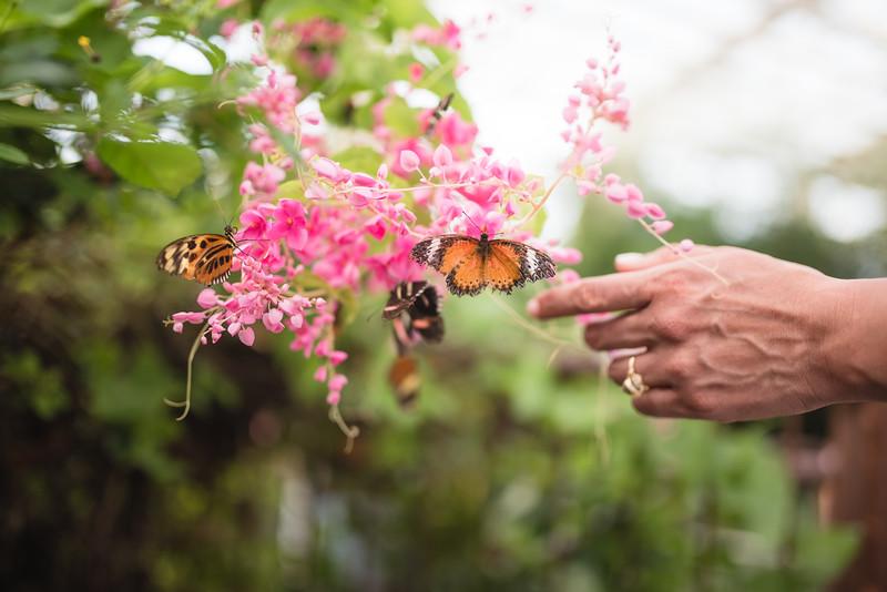Butterfly Garden (21 of 187).jpg