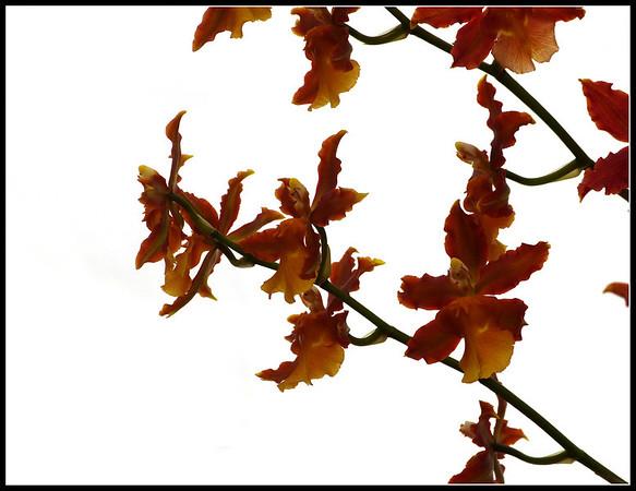 Orchids in Orticoltura Garden
