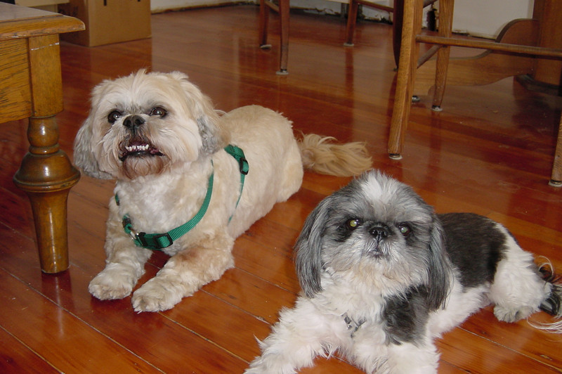 2003 03/28 to 03/29: Gizmo and Bo