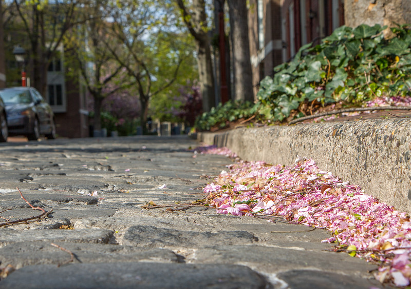pink petals on the street-9600.jpg