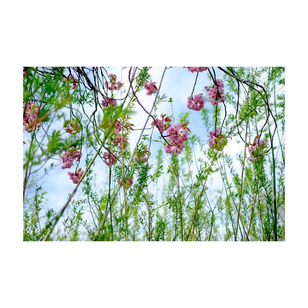113_Blossom_10x10.jpg