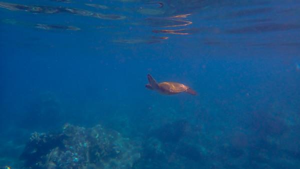Day 7: Snorkeling Honolua Bay