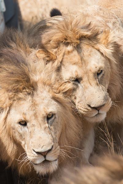 Ngorongoro Crater (Jul 16)