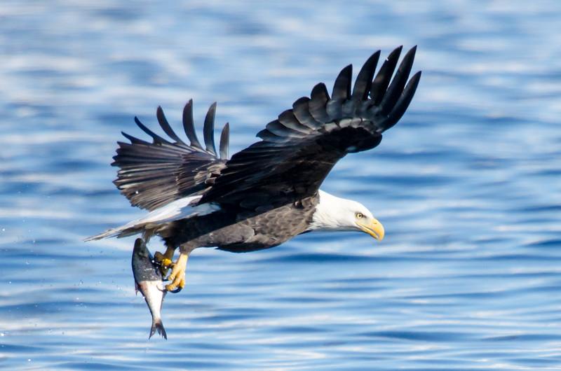 keats-eagles-winter2018-3.jpg