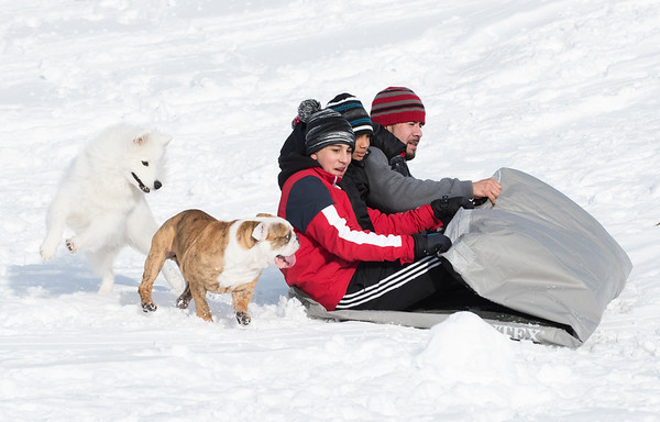 12/03/19 Wesley Bunnell | StaffrrMarcel Saavedra, L, sleds down a hill at Smith Elementary School on Tuesday December 3, 2019 as they are greeted by Roxy the Bulldog and a Samoyed named Storm.