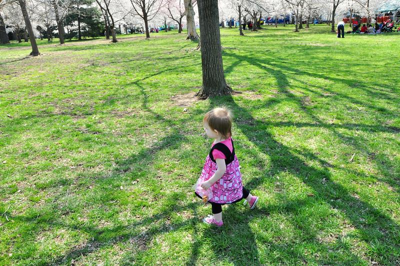 Cherry Blossoms 2014 039.jpg
