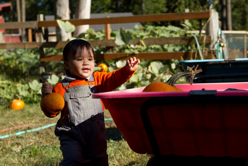 PumpkinPatch2012-254.jpg