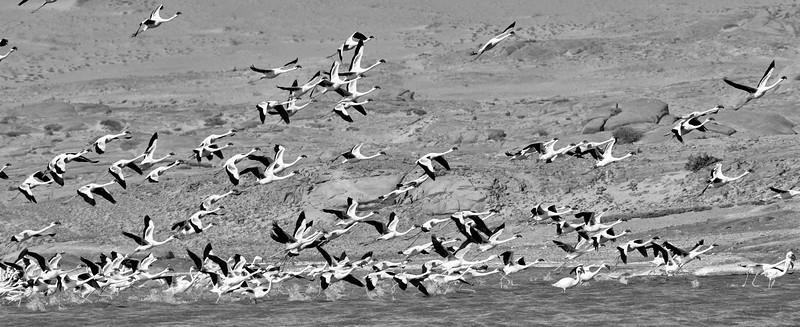 DSC_0834 Flamingos.jpg