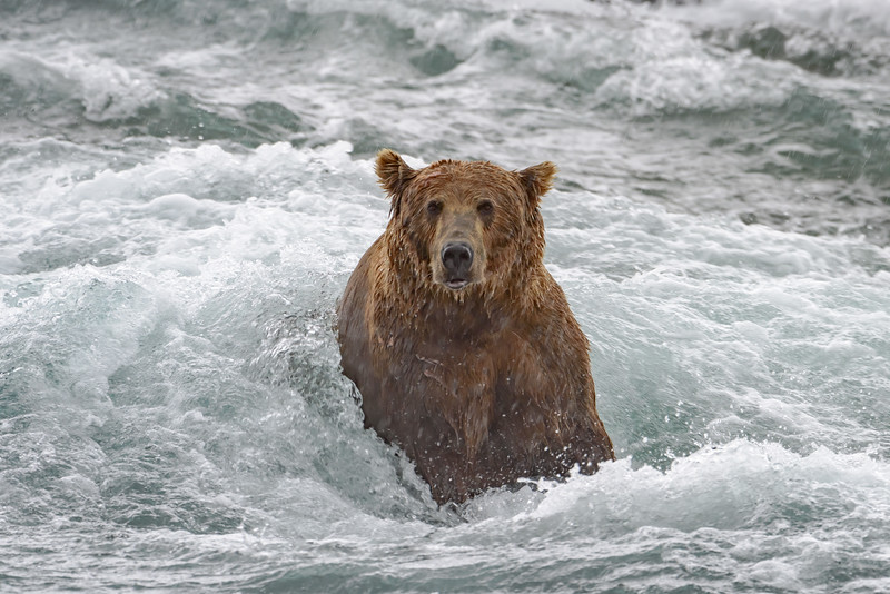 Whitewater Bear