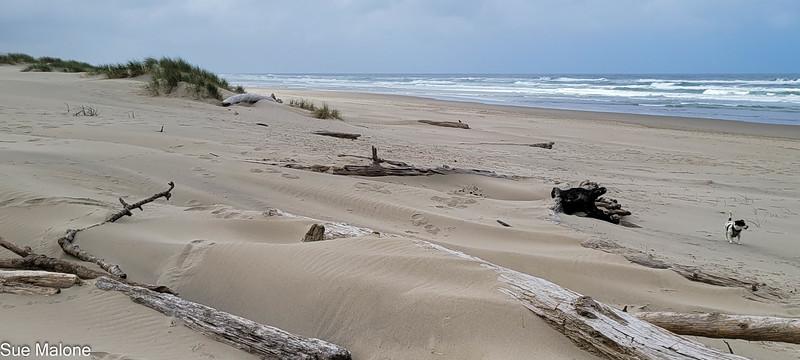 04-22-2021  Part 2 Nehalem Beach-6.jpg