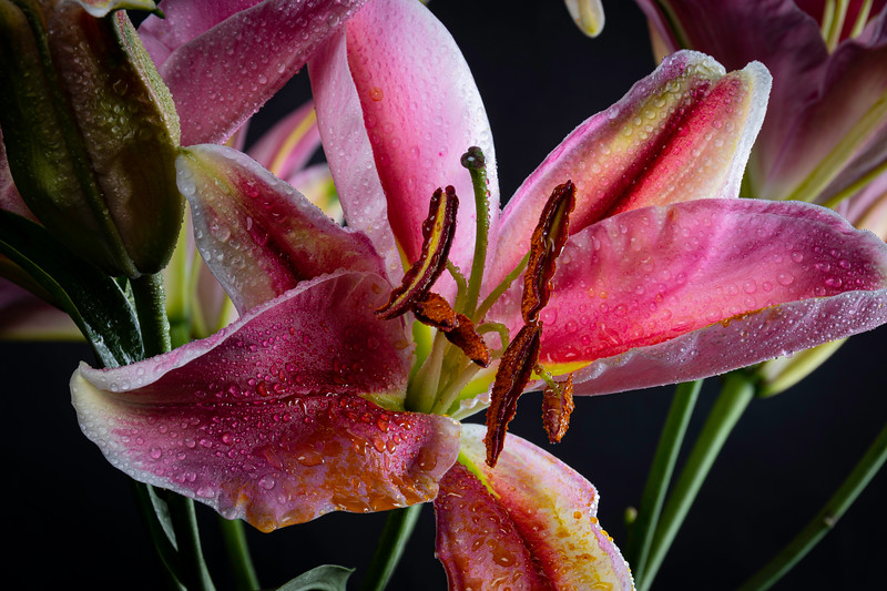 Lily2020-29.jpg