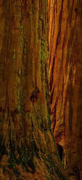 sequoia3.jpg