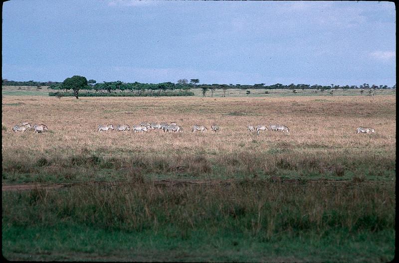 Kenya2_078.jpg