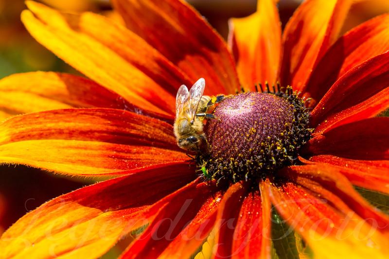 Red Bumblebee Flower