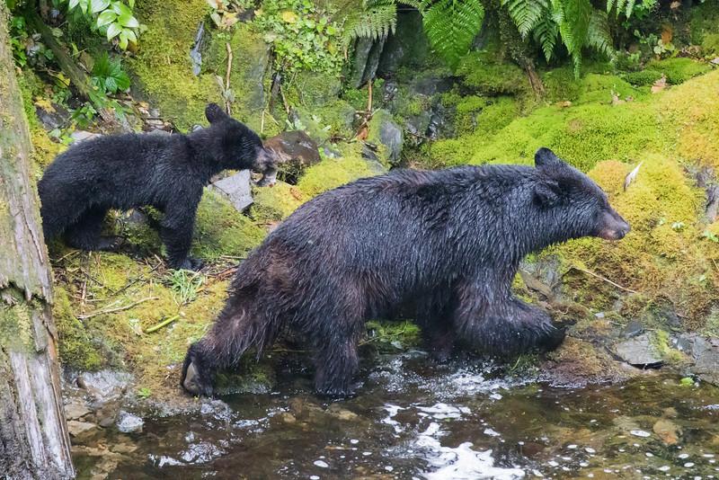 Alaska 2015 - Ketchican -  072815-193.jpg