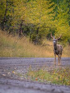 Fernie Backcountry, British Columbia, Canada