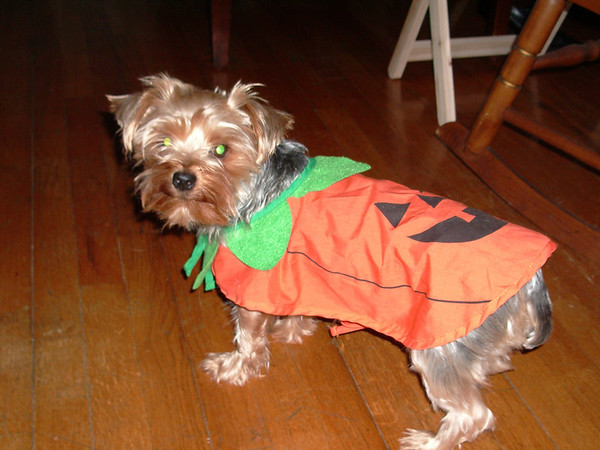 2005 Whoozie in the punpkin patch