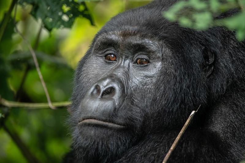 Uganda_T_Gor-2337.jpg