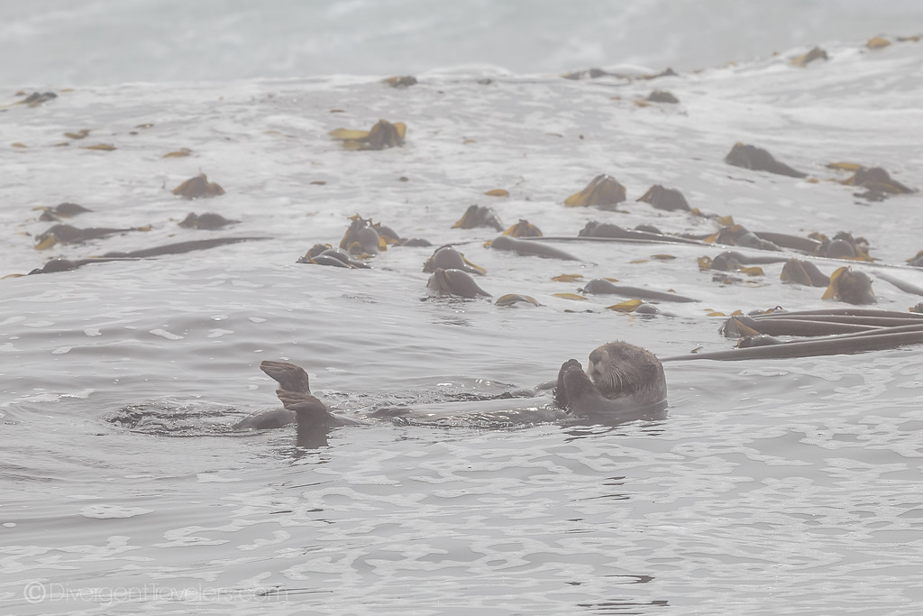 Kayaking Vancouver Island - Sea otter - Lina Stock