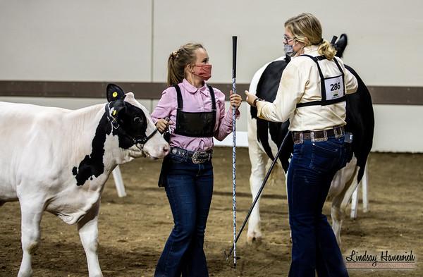Steers - Intermediate Showmanship