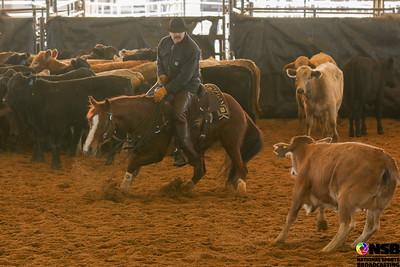 Tuesday 25k Novice Horse