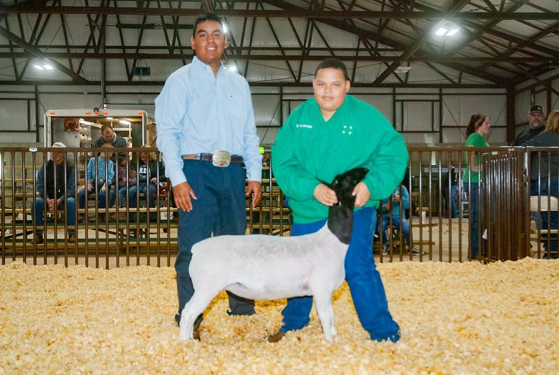 kay_county_showdown_sheep_20191207-122.jpg