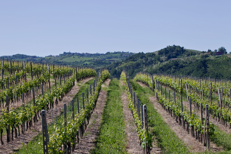 The strong parallel lines of the vineyards draw your eyes across the land to the horizon.