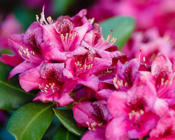 Spring 2015 Blog