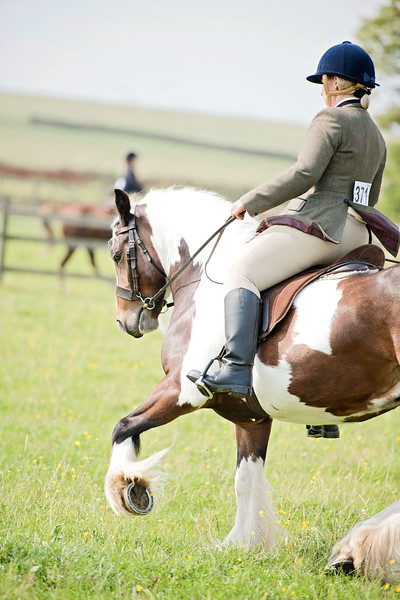 Local horse shows