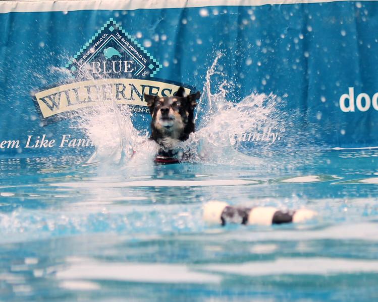 Dock Dogs at Fair-043.JPG