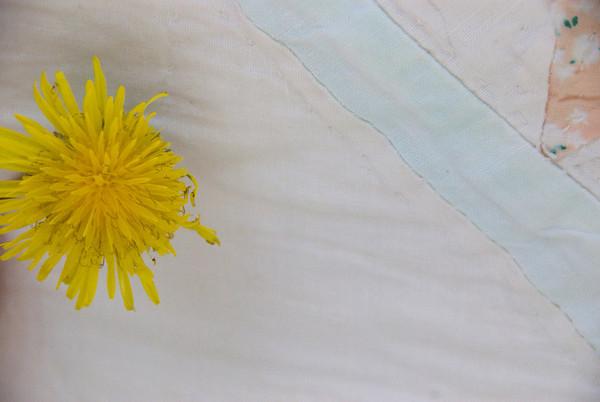 Clara's flowers