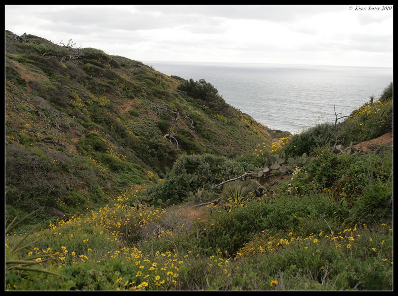Wildflowers, Torrey Pines State Reserve, San Diego County, California, April 2010