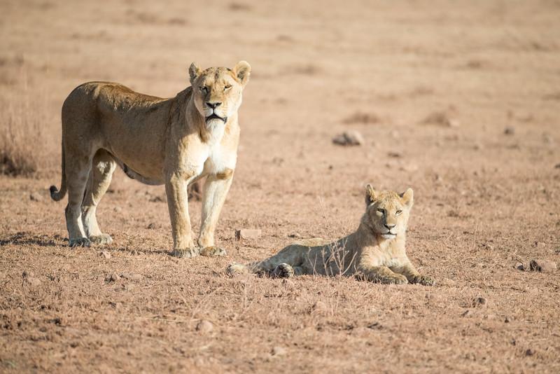 Africa - 101816 - 6888.jpg