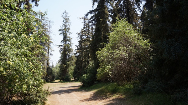 Griffith Park - Redwoods - Camp - FILE PICS