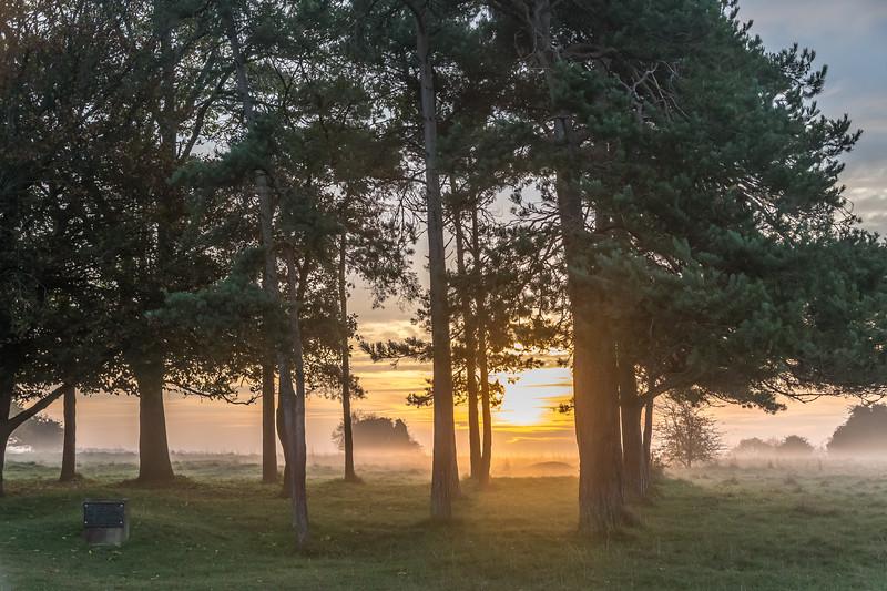 Baden Powell Copse at dawn