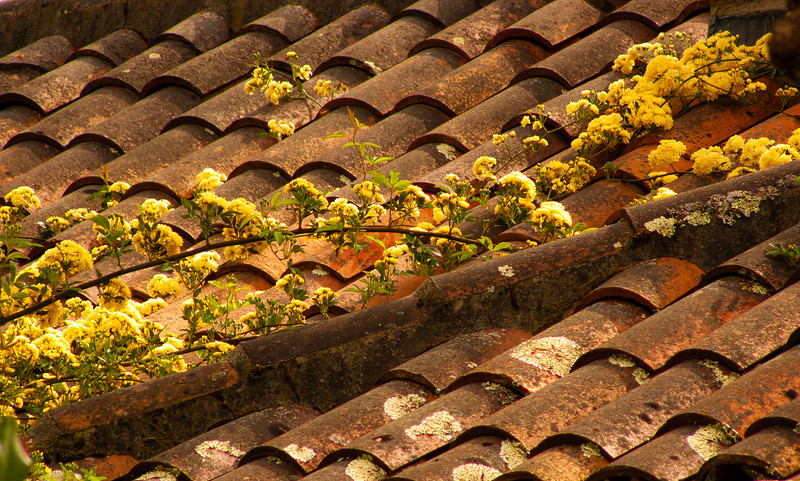 Roof, Filoli,  Woodside, California, 2007