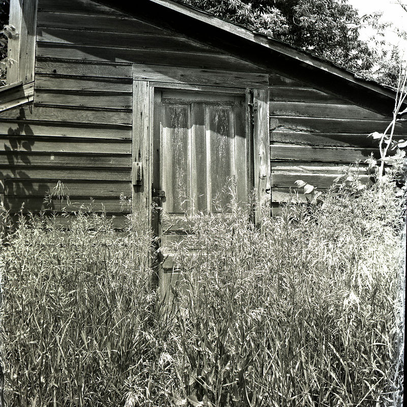 Door and weeds.jpg