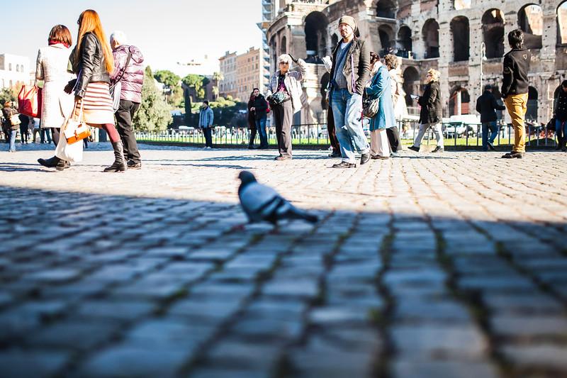 turisti e piccioni al Colosseo