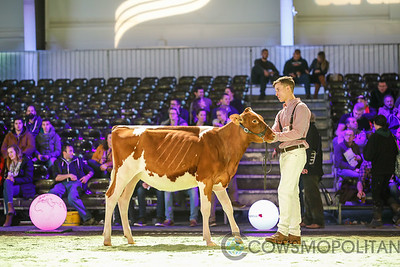 Swiss Expo Red Holstein Hfrs 2018
