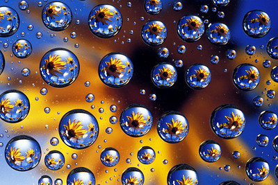 Images in Water Drops