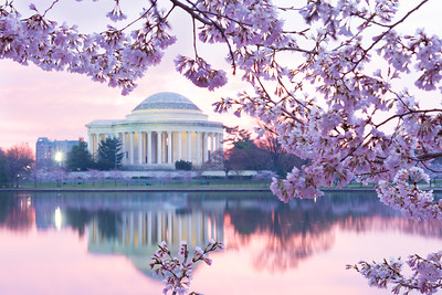 Washington DC, Monuments, and Cherry Blossoms