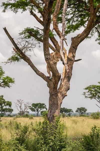 Uganda_T_QE-1535.jpg