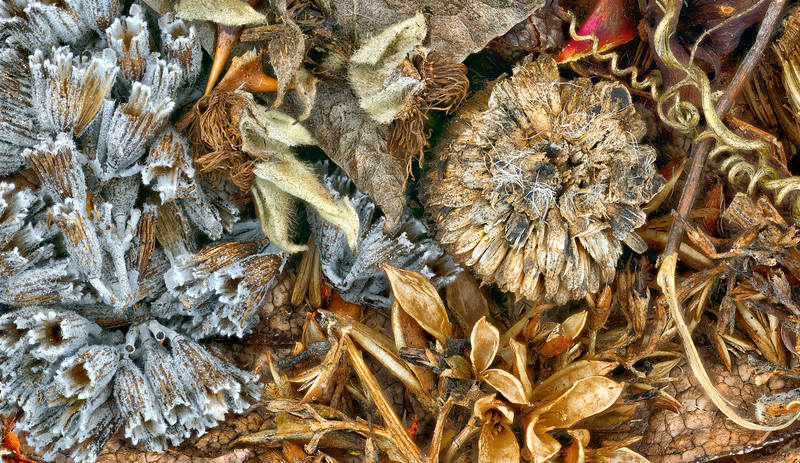 Seed Pods 3