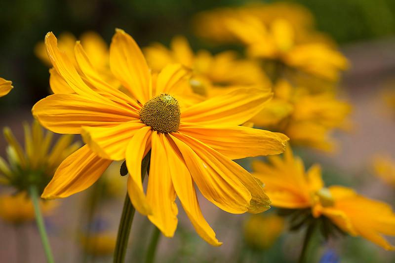 Botanicgarden12-0938.jpg